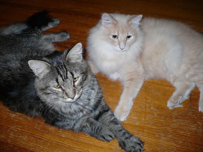 kitties on floor[1] (1)